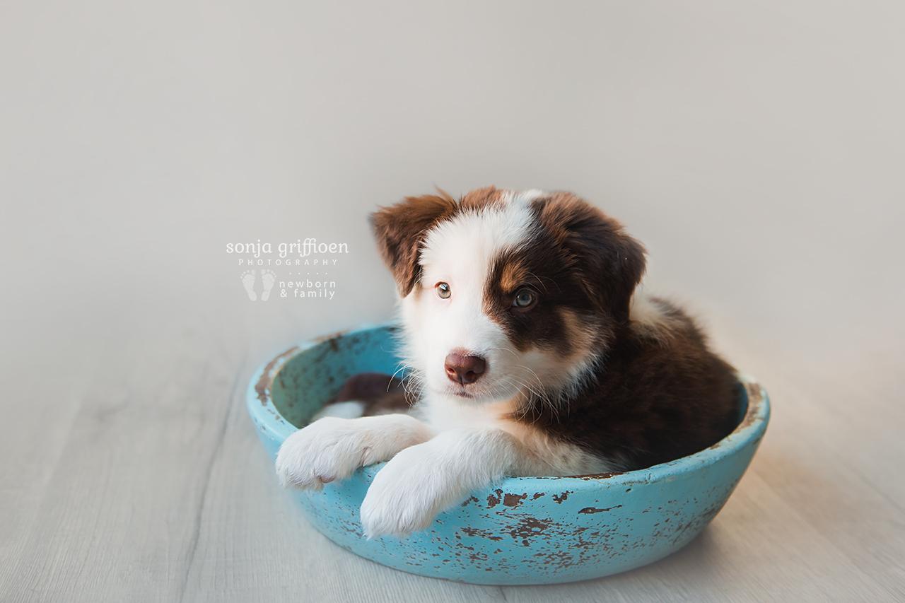 Bailey-8-weeks-Brisbane-Newborn-Photographer-Sonja-Griffioen-02.jpg